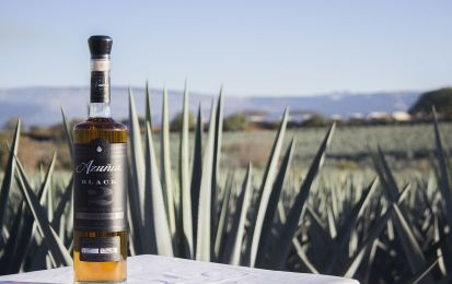 Mezcal vs tequila: le differenze da conoscere