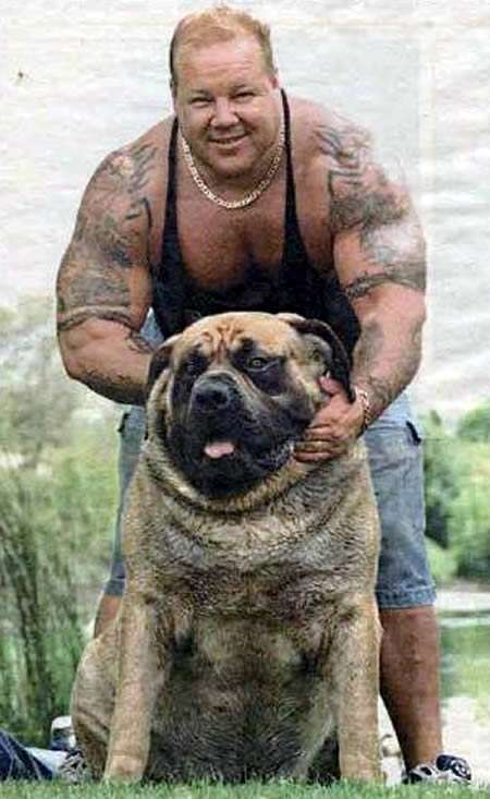 Hercules, cane gigante